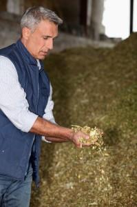 Finansējums lauksaimniekiem