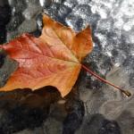 rudens laika ziņas
